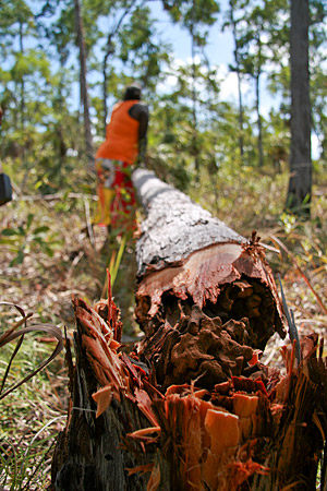 Our friend Lena cutting Yidaki in the Northern Territory of Australia